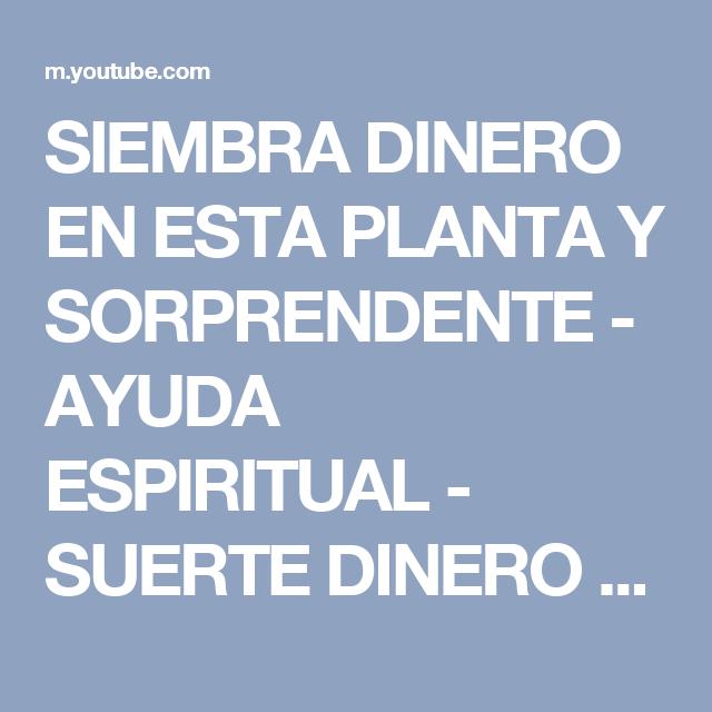 SIEMBRA DINERO EN ESTA PLANTA Y SORPRENDENTE - AYUDA ESPIRITUAL - SUERTE DINERO - YouTube