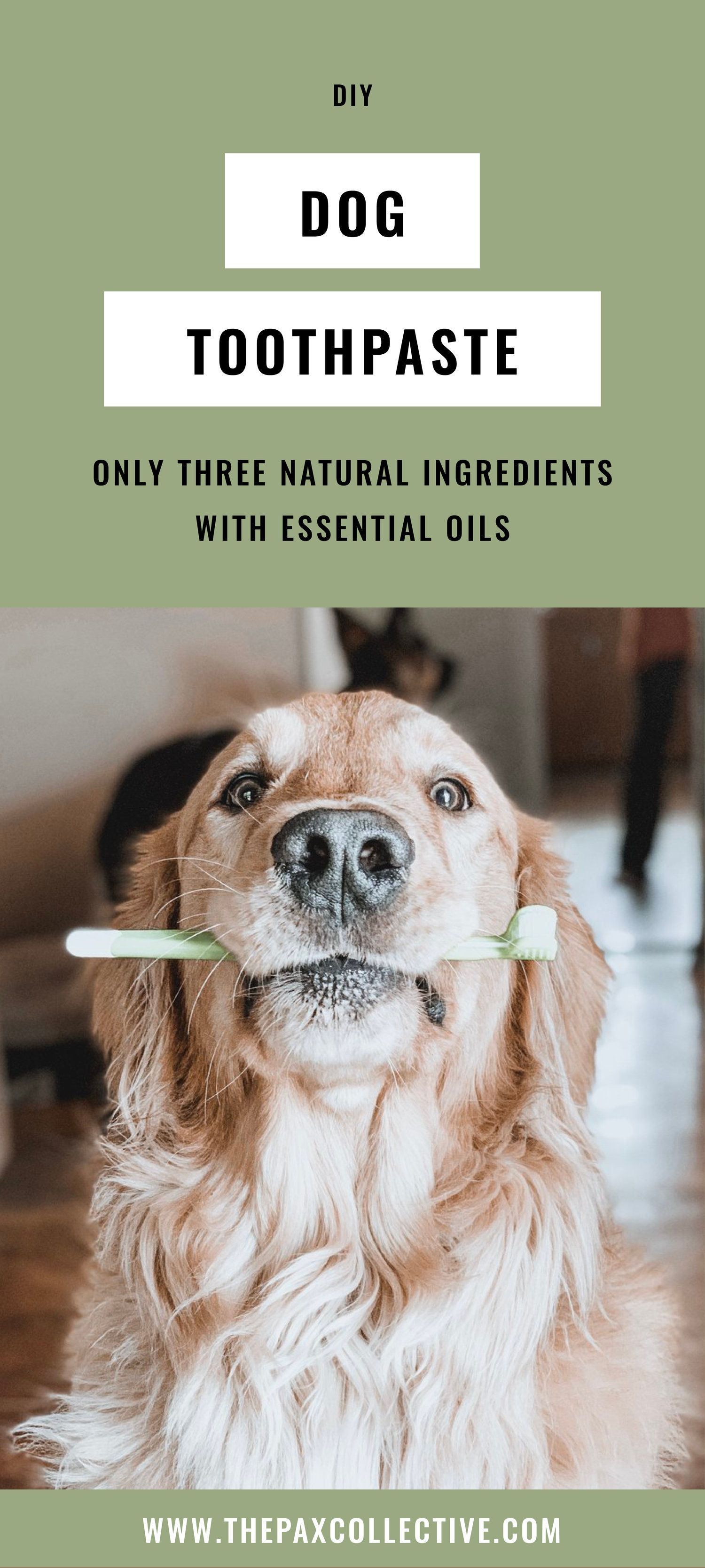 Diy allnatural dog toothpaste with peppermint essential