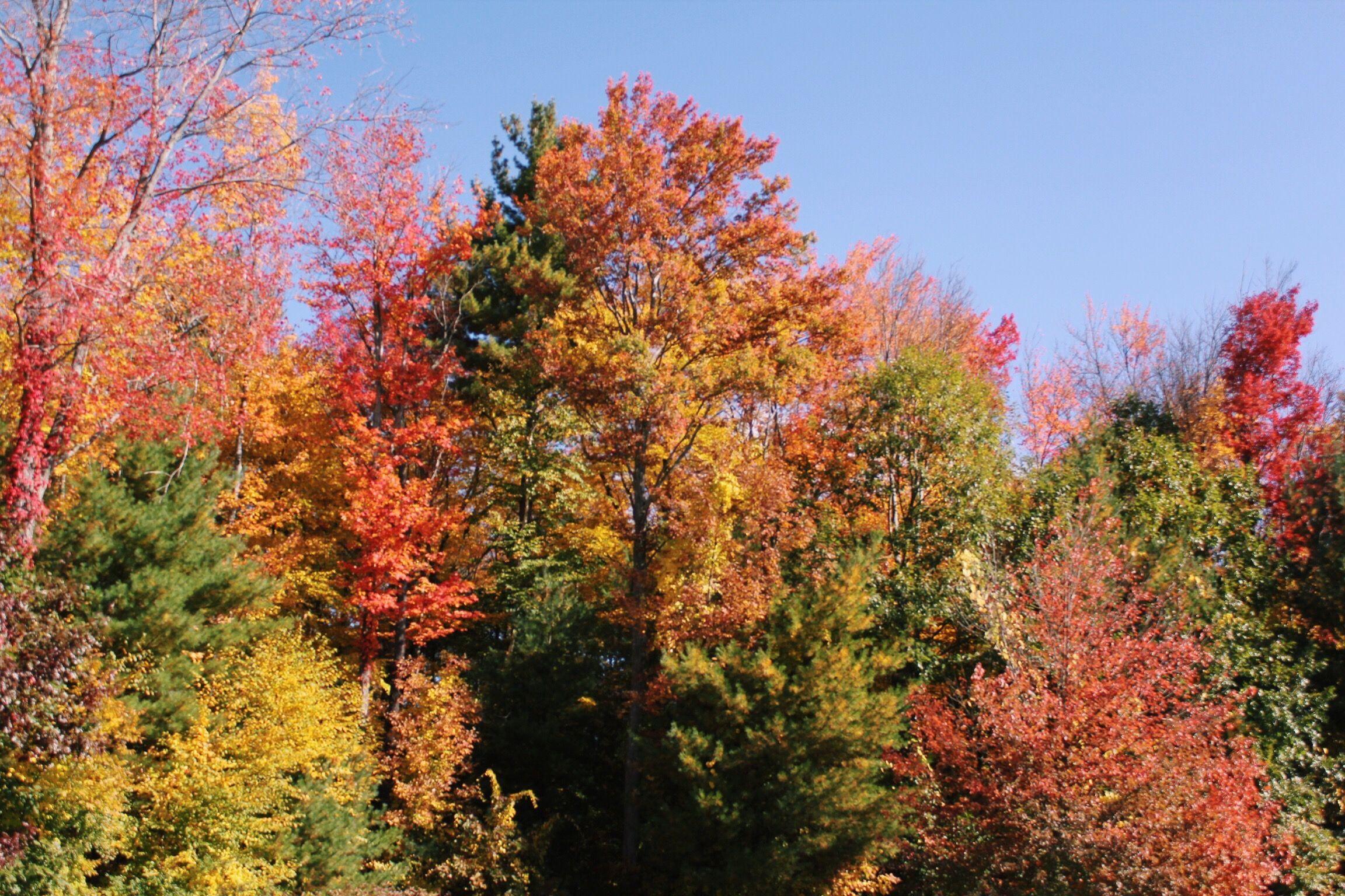 fall foliage, albany ny #hellozephyr www.hellozephyr.com
