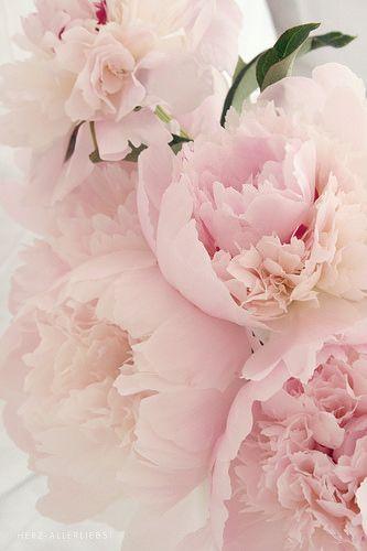 Bloom Rebelbyfate Jewelry Fiori Peonie Rosa Immagini Di Fiori