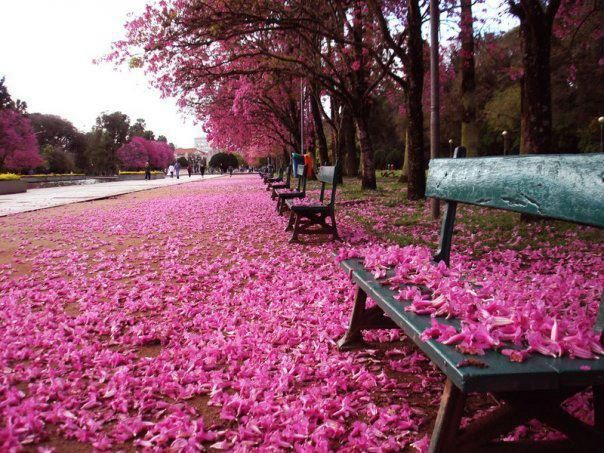 Farroupilha Park - Porto Alegre - Rio Grande do Sul - Brazil - Photo by Alexandre Simas