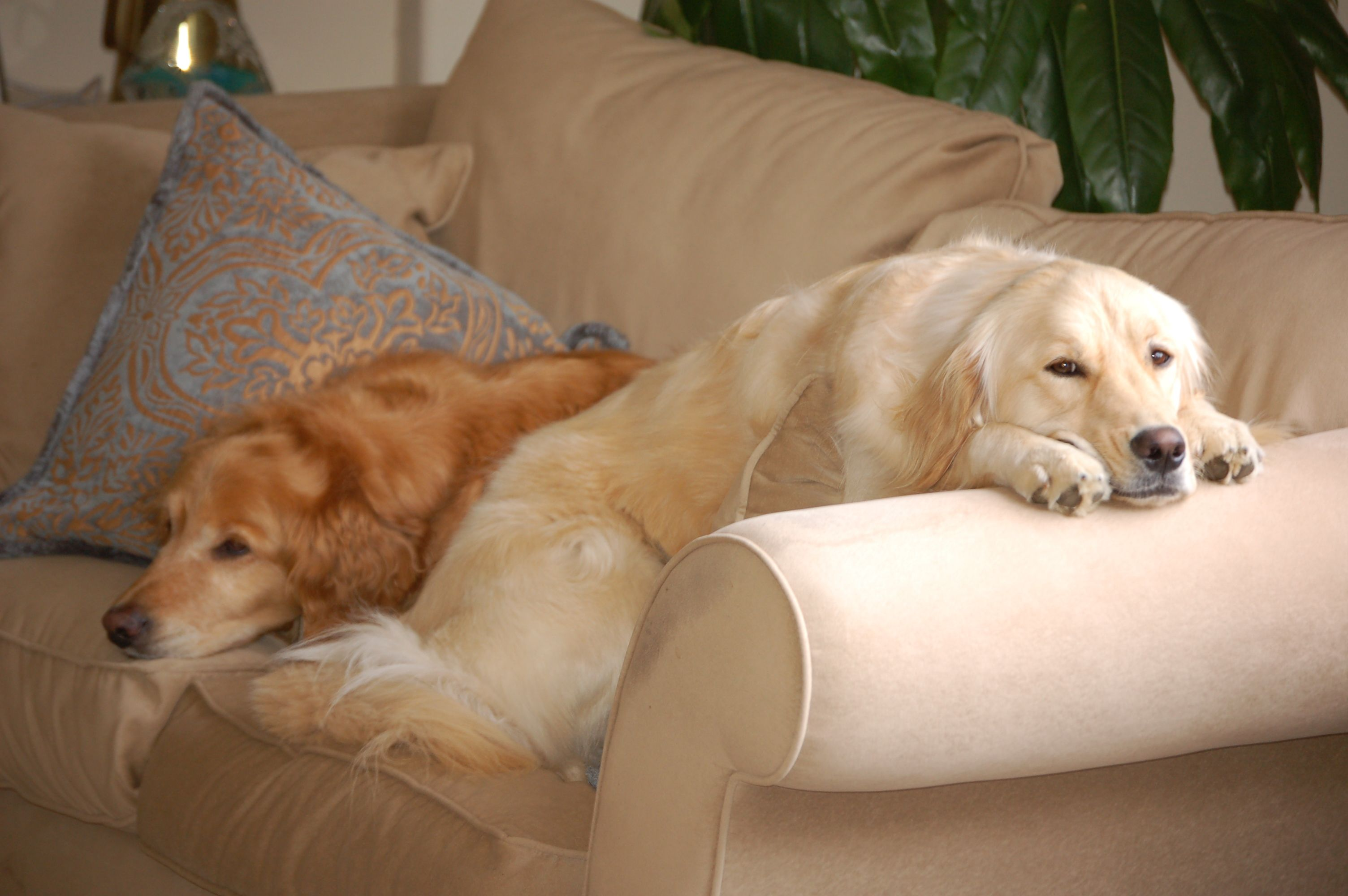 Scoobs and Kayla lounging