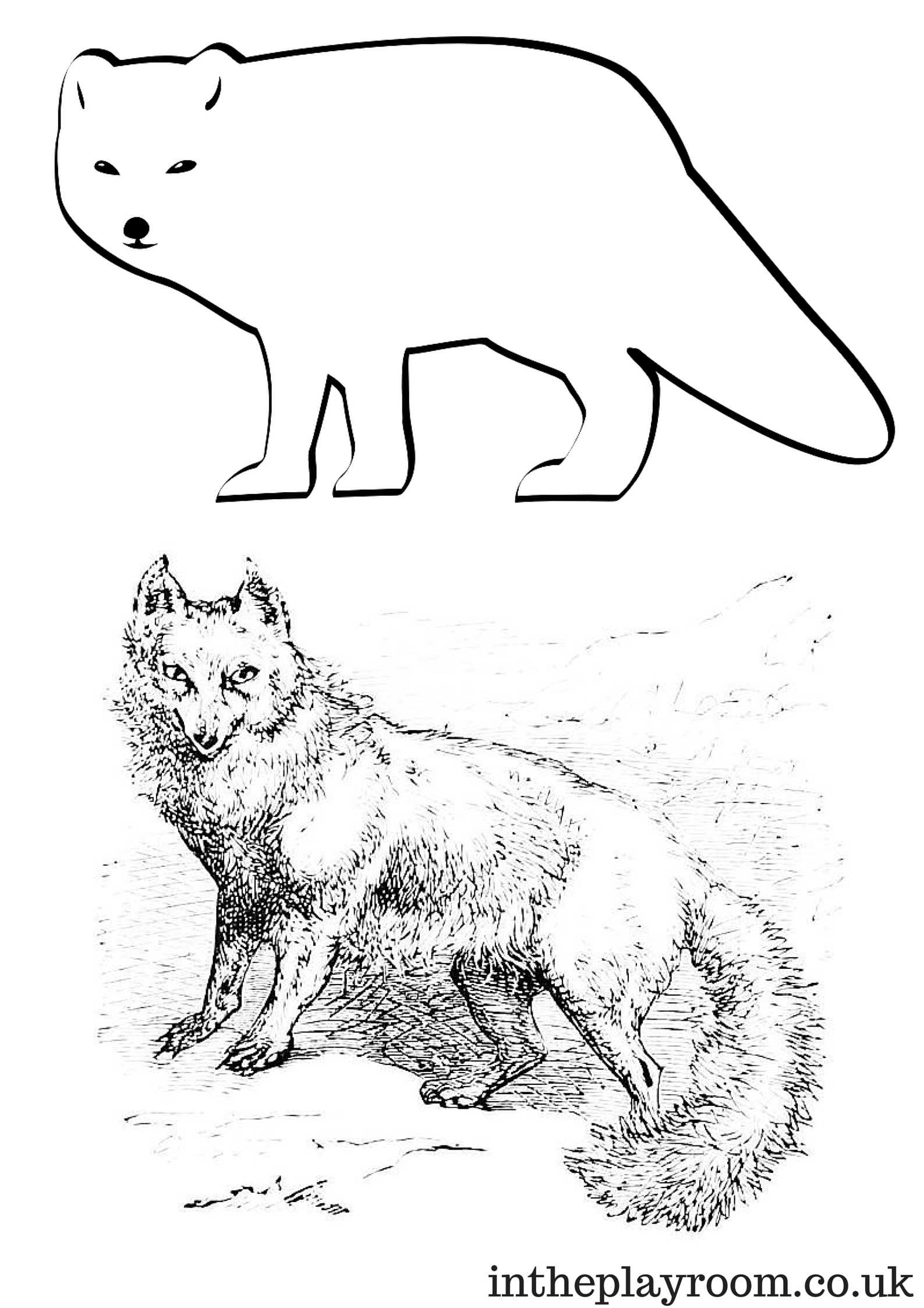 Arctic Animals Colouring Pages Fox coloring page, Arctic