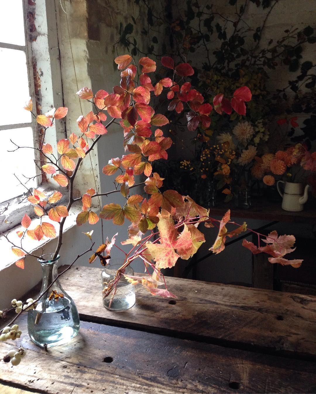 My Ultimate Foliage Man Geoff Growparknursery Autumn Home Flower Arrangements Fall Colors