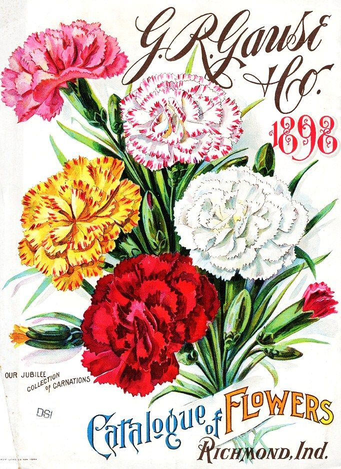 G R Gause Co 1898 Vintage Seed Packets Flower Seeds