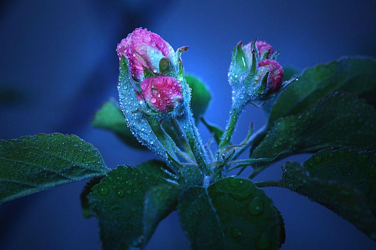 flowers | by volodymyrshram | http://ift.tt/1Z73htT
