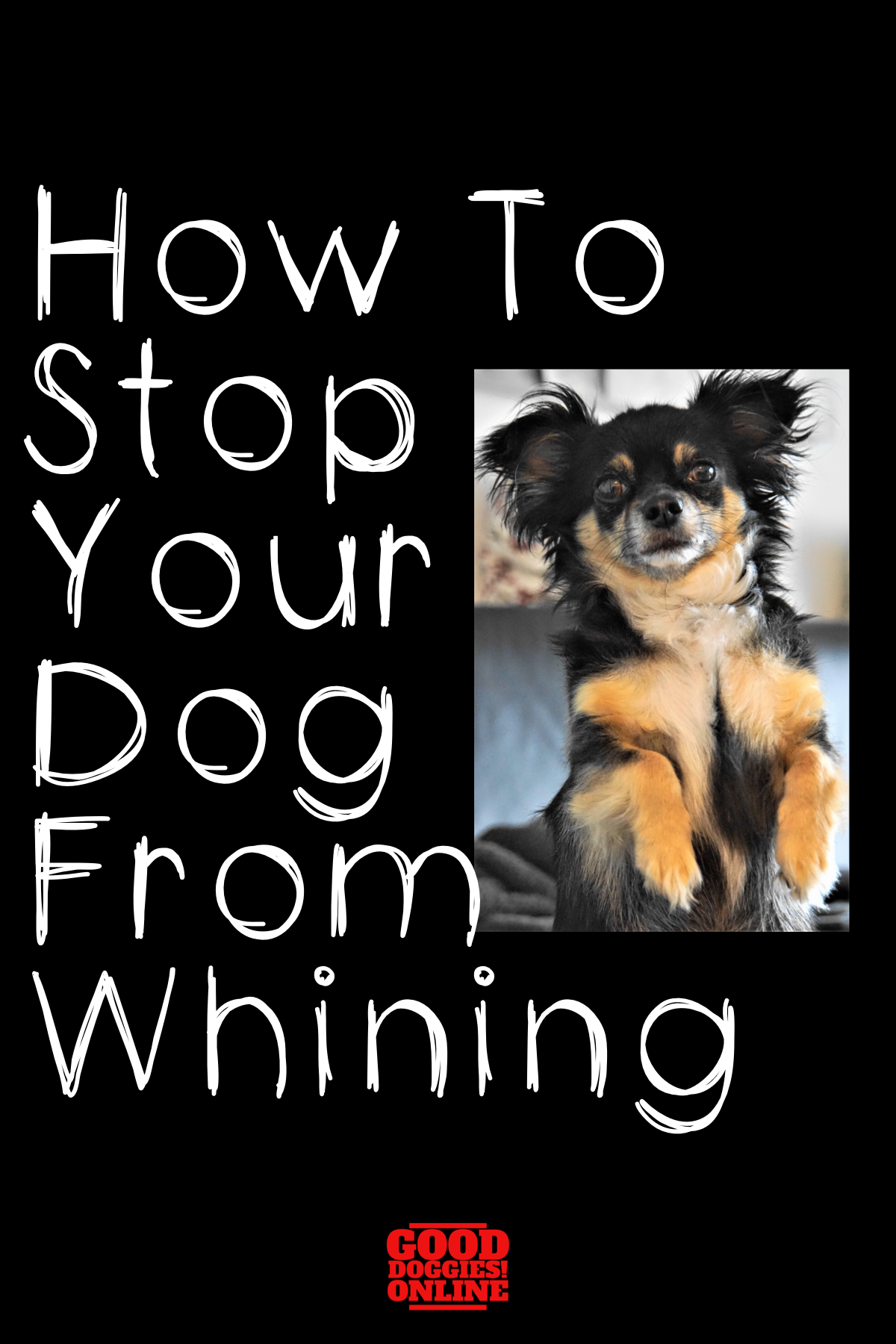 How To Stop Your Dog From Whining Good Doggies Online Dog Whining Puppy Whining At Night Puppy Whining