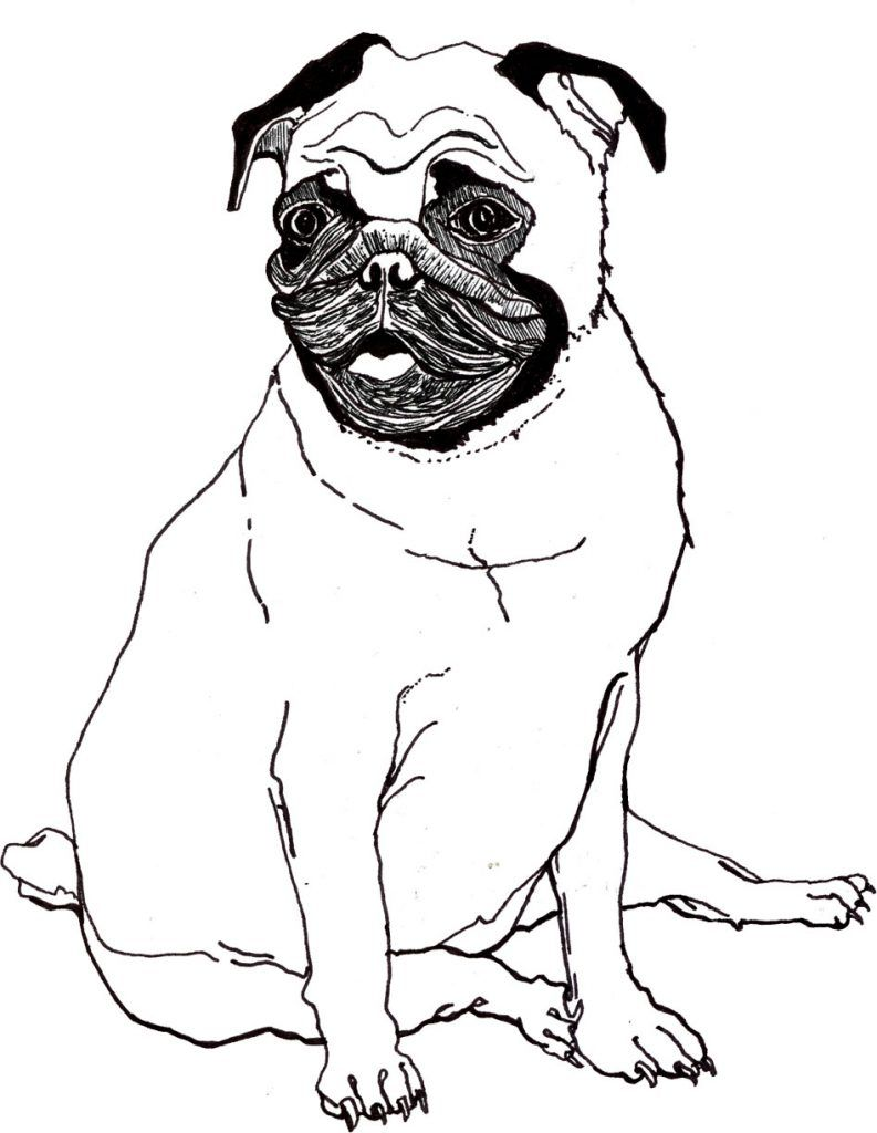 Pug Coloring Pages - Best Coloring Pages For Kids  Dog drawing