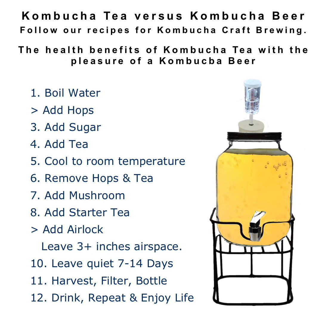 Kombucha Beer Brew Kit Complete Just Add Water How to