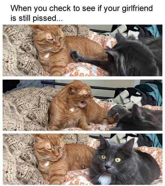 LoL! ! But true..