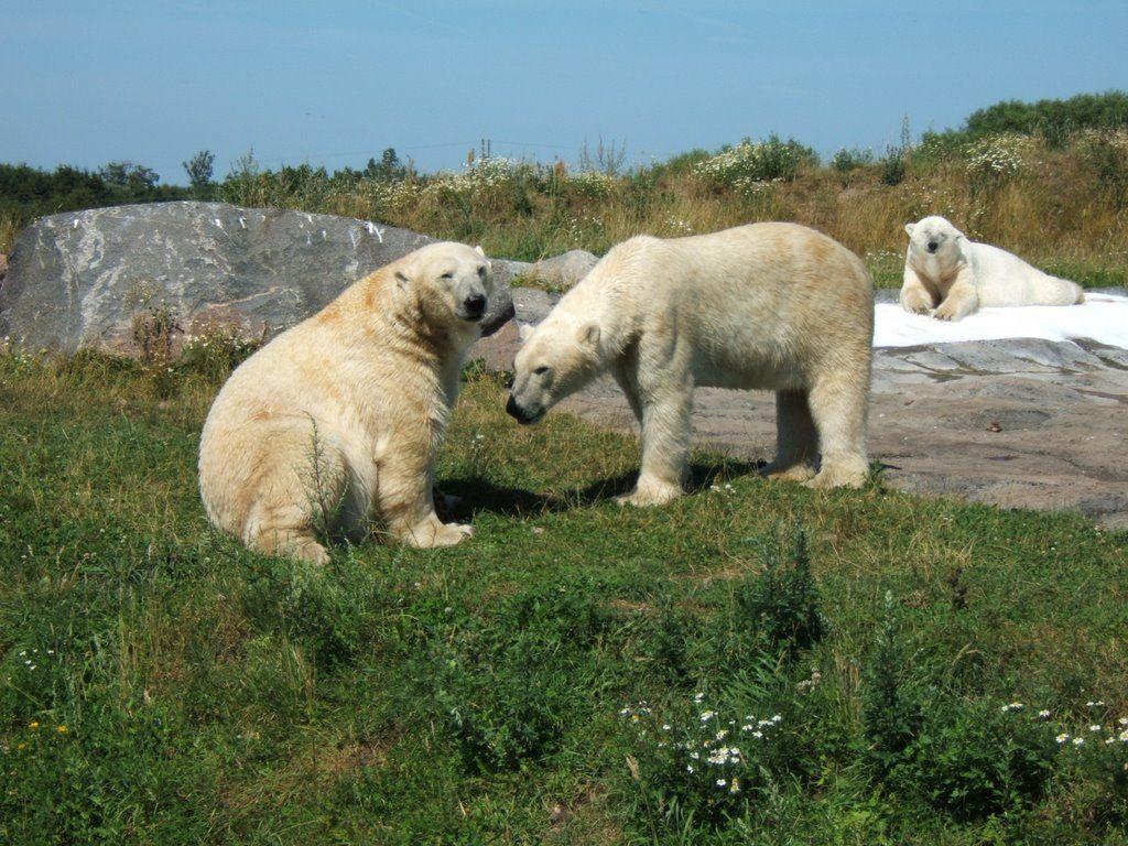 Skandinavisk dyrepark © by Sunpixx