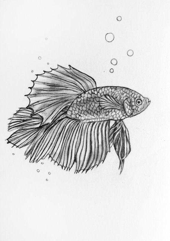 Original Pencil Drawing Siamese Fighting Fish 44 Fish Drawings Pencil Drawing Tutorials Pencil Drawings
