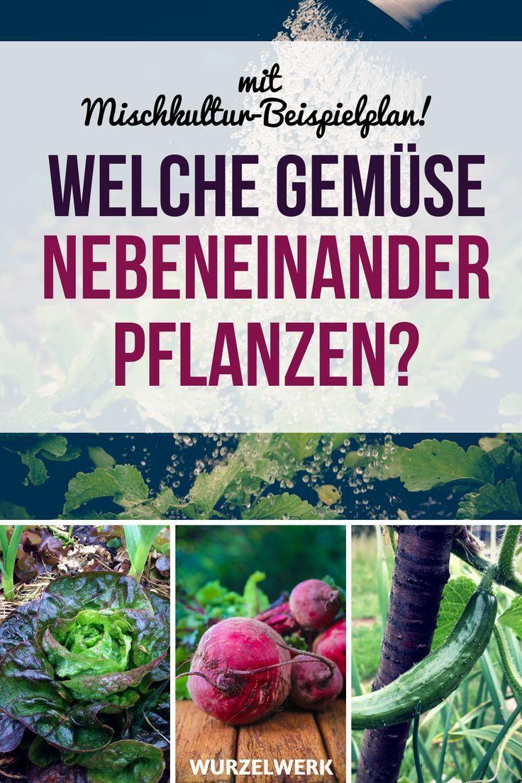 28 Gemüsearten und ihre wirksamsten Mischkultur-Partner + Beispielplan - Wurzelwerk #kräutergartenbalkon
