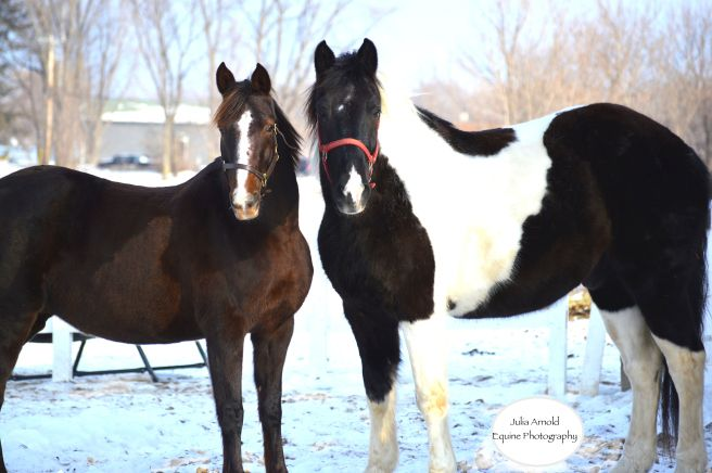 Equine Photography in Minnesota. {JAEquinePhotography.com} #horses #photography