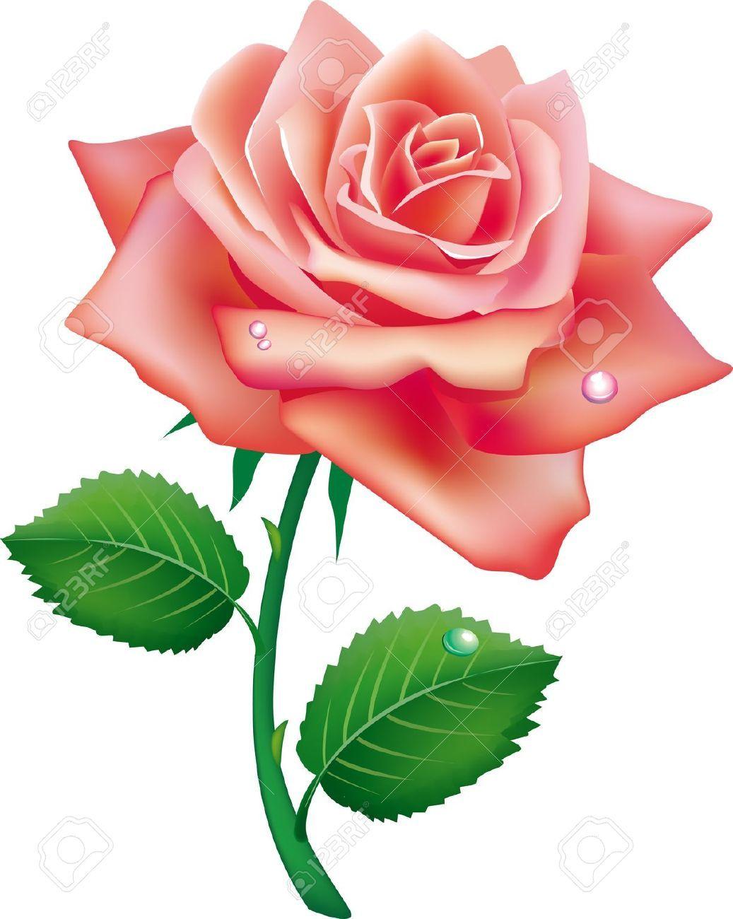 9716646 illustration of single rose stock vector rose flower pink 9716646 illustration of single rose stock vector rose voltagebd Gallery
