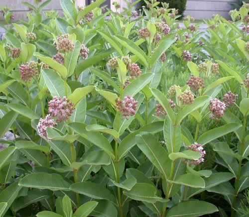Garden Plant 3 3 5