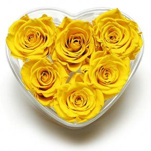 Canary Yellow Rose Heart Lasts For Up To Two Years Yellow Roses Rose Yellow Fashion