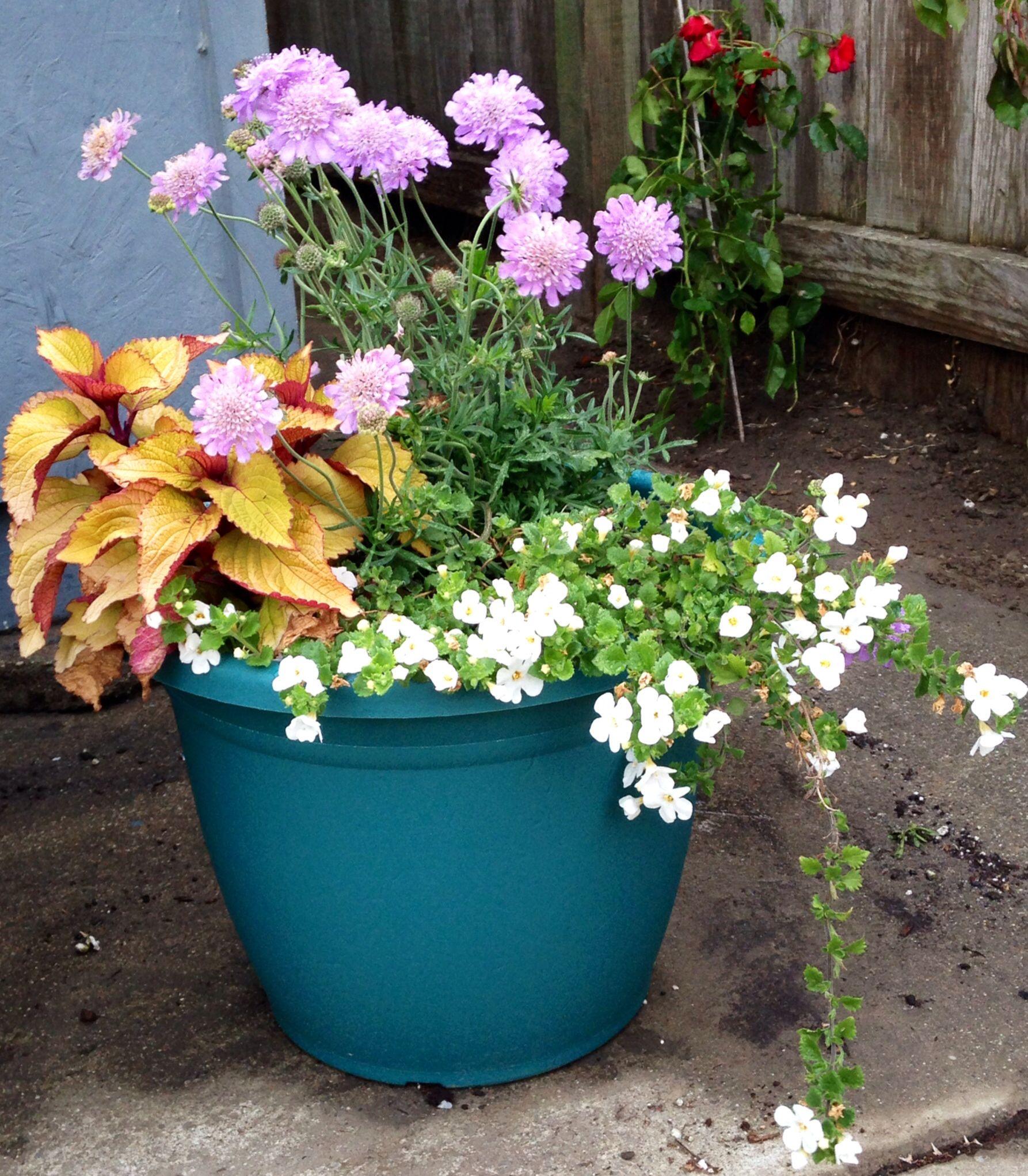 Susan's Garden - flowers - container garden Susan's Flower Susan's garden, succulents, hanging flowers, flower, arrangement, murphyfrog, repurpose, container gardening, colorful bloom