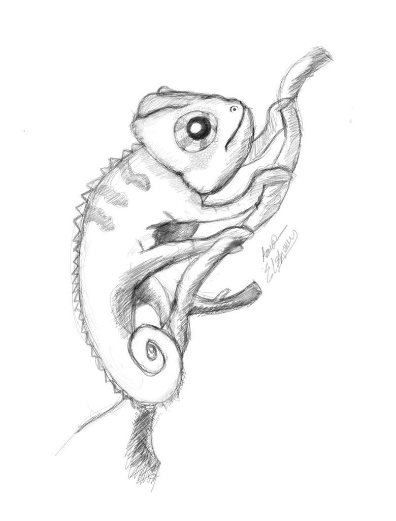 513f84c30 Neat sketch of a chameleon. | Chameleons in 2019 | Chameleon tattoo ...