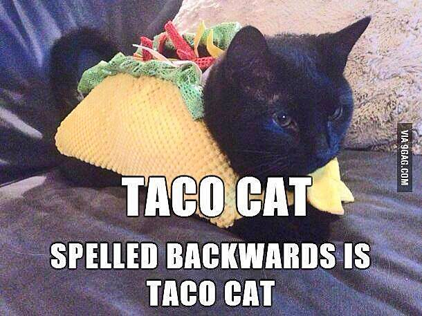 Funny Cat Memes Clean : Taco cat spelled backwards is taco cat word play pinterest
