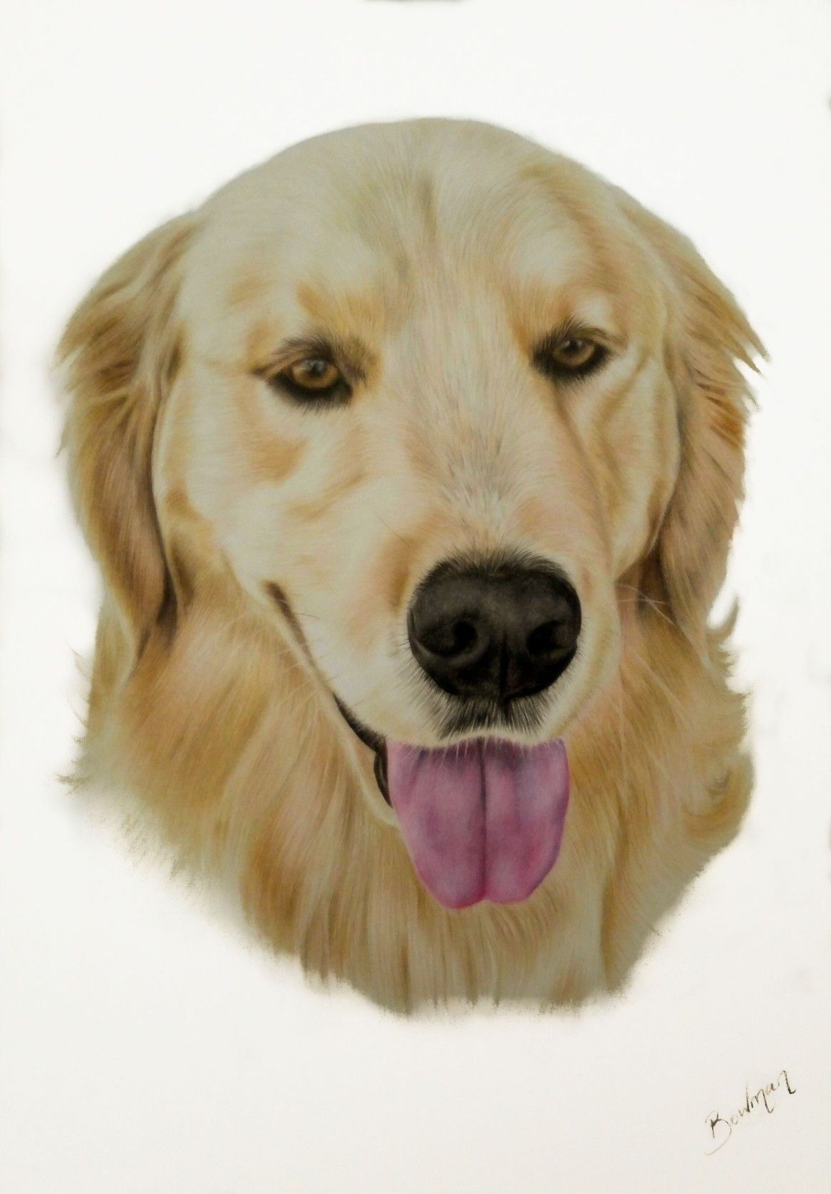 Golden retriever in coloured pencil by Personal Artwork
