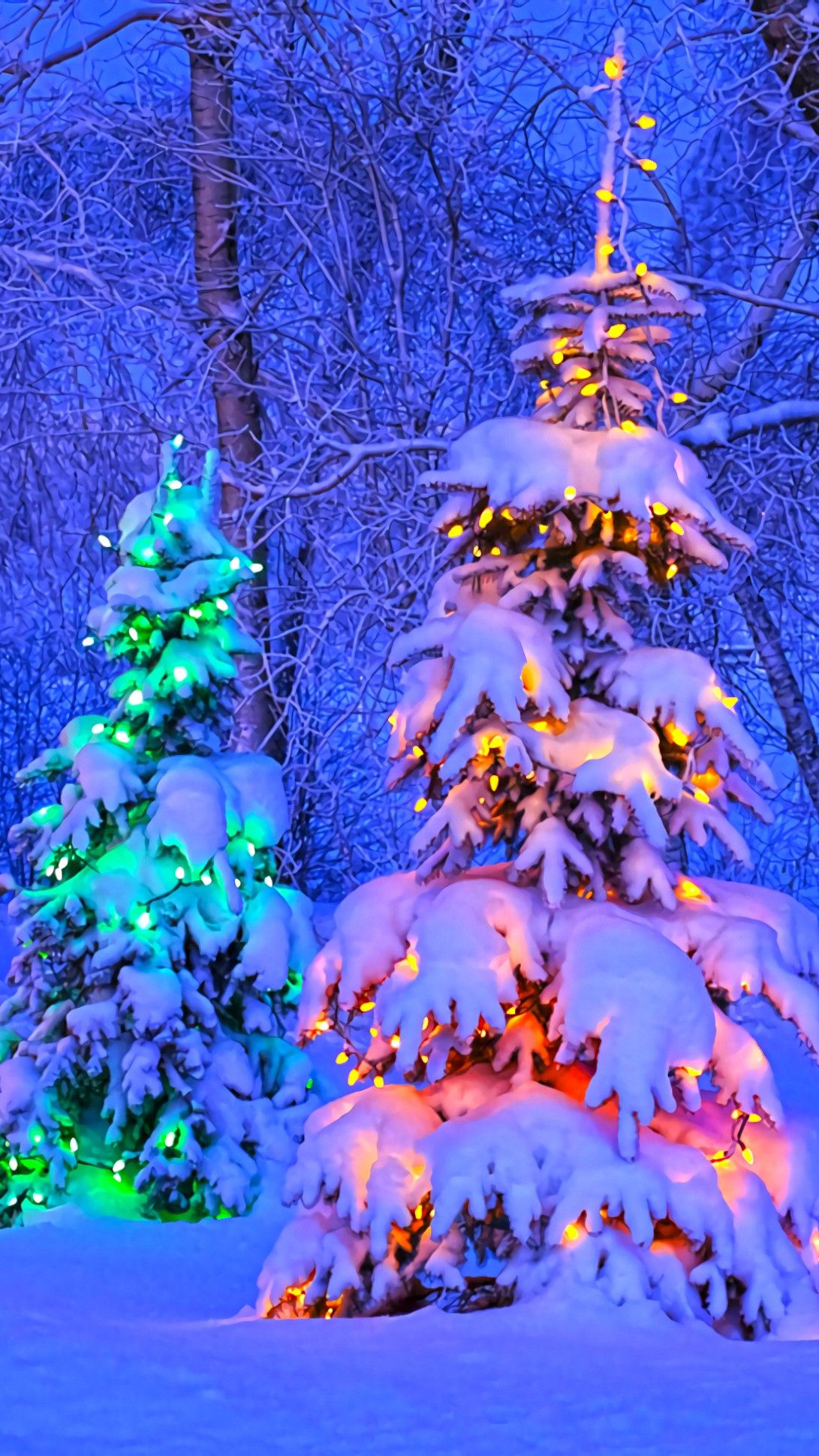 Christmas Trees Phone Wallpaper for iPhone iPad Android