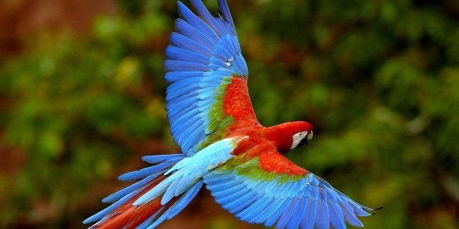Beautiful Birds Wallpapers Pictures Hd Wallpapers Full Hd