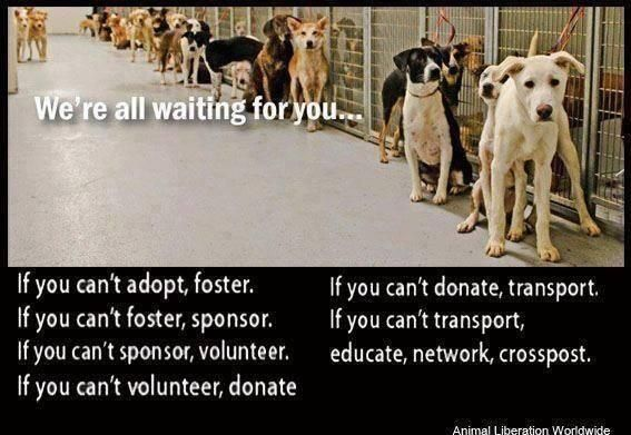 Pin On Adopt Or Rescue A Pet