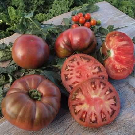 Bei Aldi Nord Gibt Es Ab Heute 4 5 Sechs Verschiende Sorten Der Historischen X2f Seltenen Tomatenpf Pflanzen Aldi Tomaten
