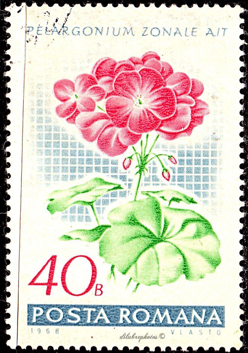 Romania.  VARIOUS GERANIUMS.  Scott 2021  A626, Issued 1968 July 20, Photo., Perf. 13 1/2, 49. /ldb.