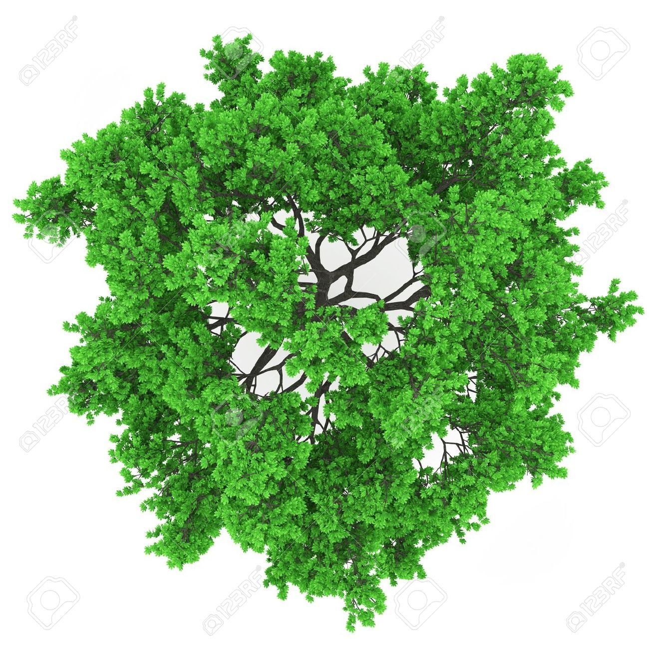 Top View Tree Photoshop Shape