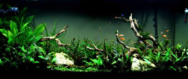 Aquarium driftwood manzanita wood aquarium gardens for Fish tank driftwood