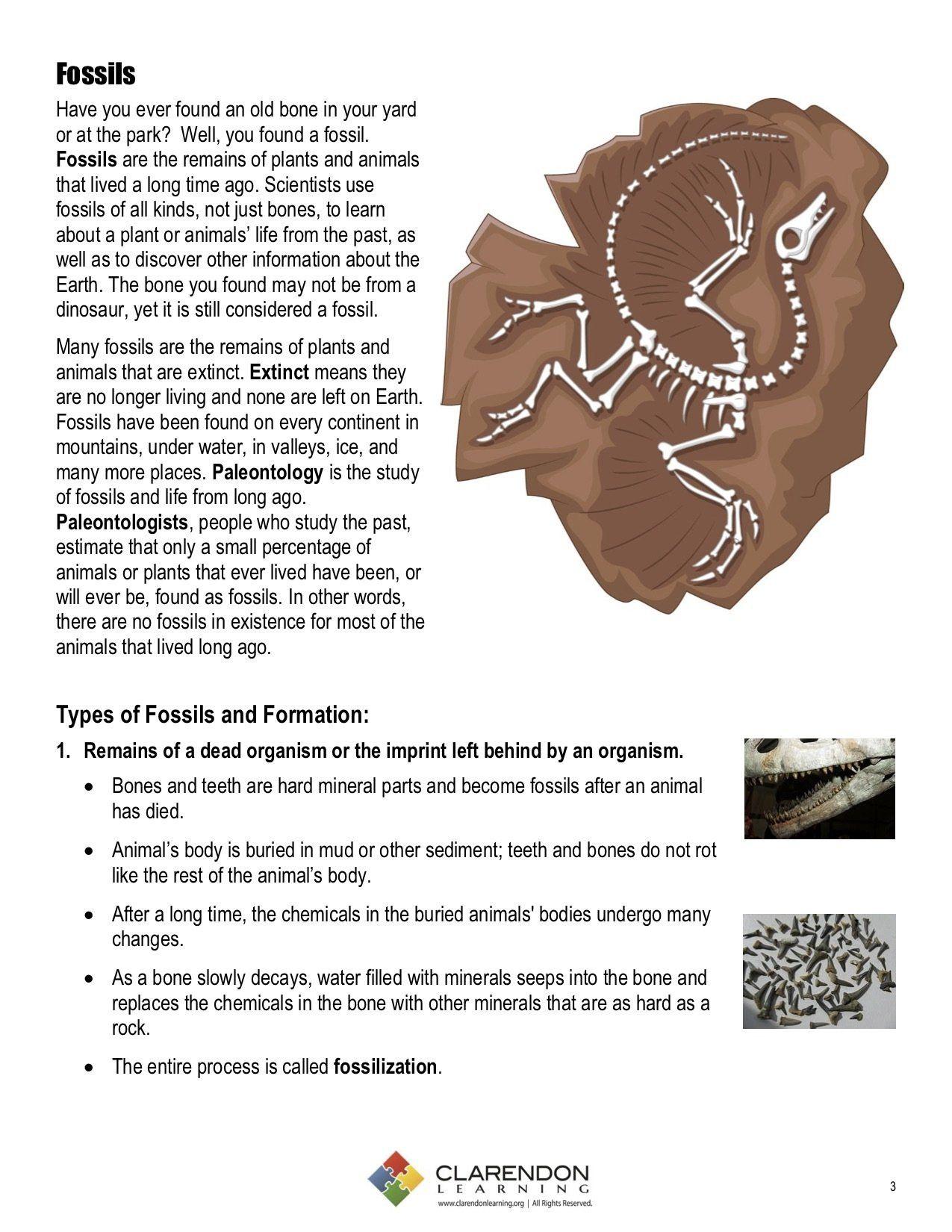 Fossil Formation Worksheet