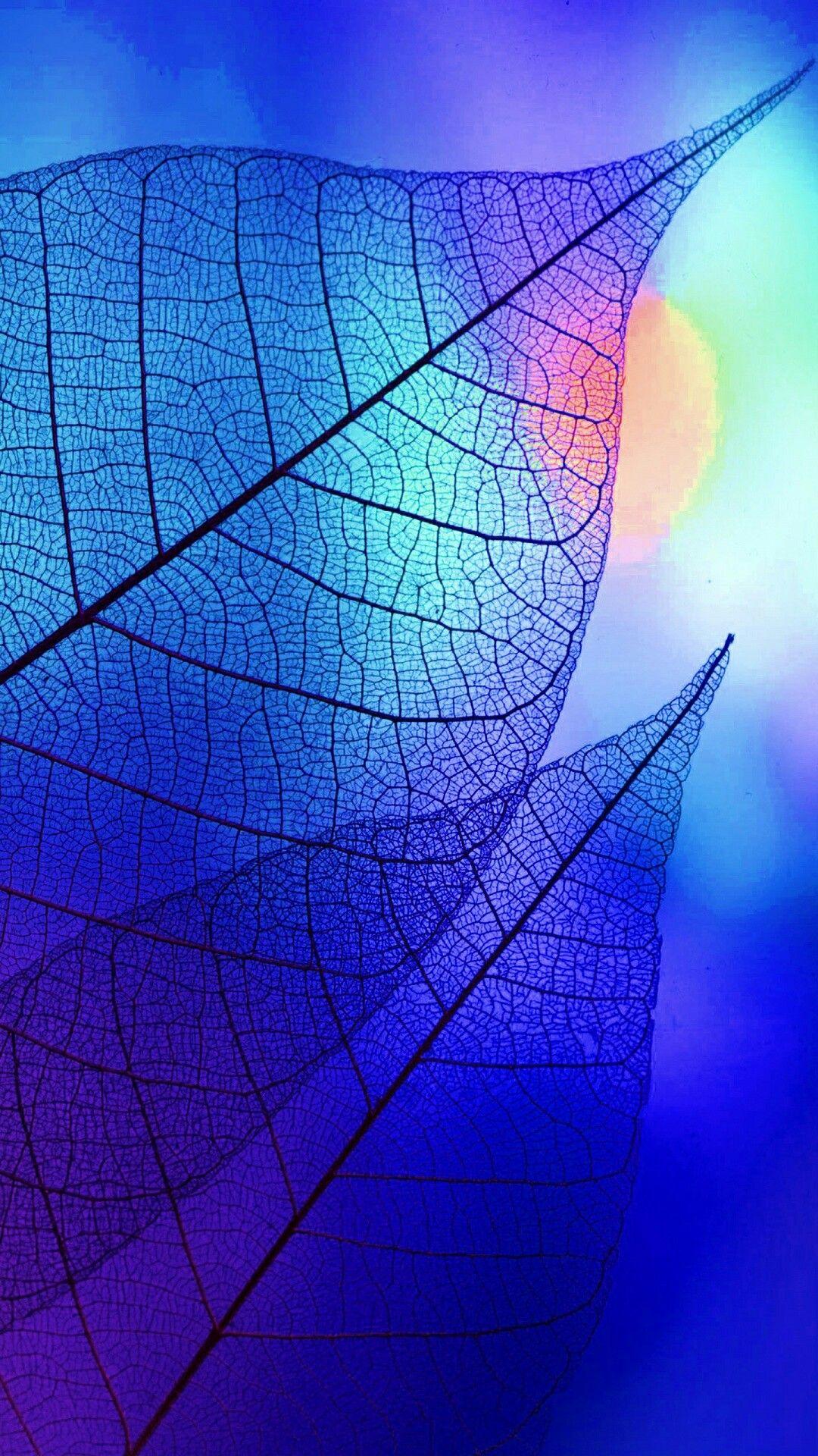 Leaves Blue Drawings Colorful Wallpaper Best Iphone Wallpapers