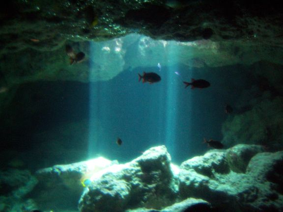 divine_undersea_by_farblade.jpg (576×432)
