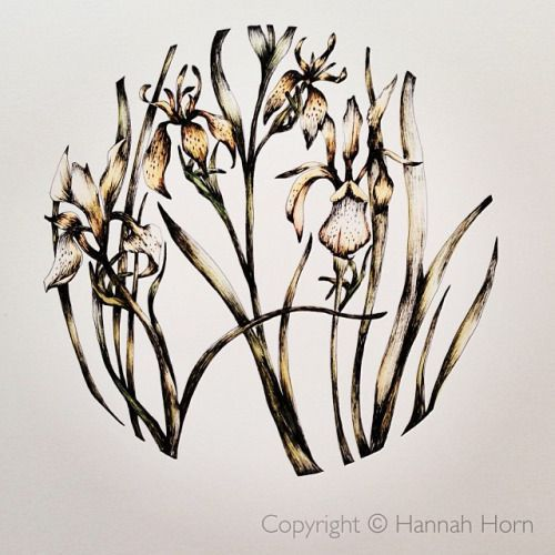 Botanica somnia opens the 11th September at the Northcote Gallery, Kings Road. #...