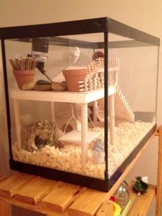 hamster cage diy aquarium conversion my mini farm pinterest rennmaus kleintiere und m use. Black Bedroom Furniture Sets. Home Design Ideas