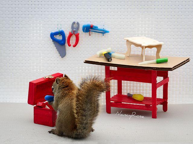 yay finally found the blue hammer photography squirrel rh pinterest com
