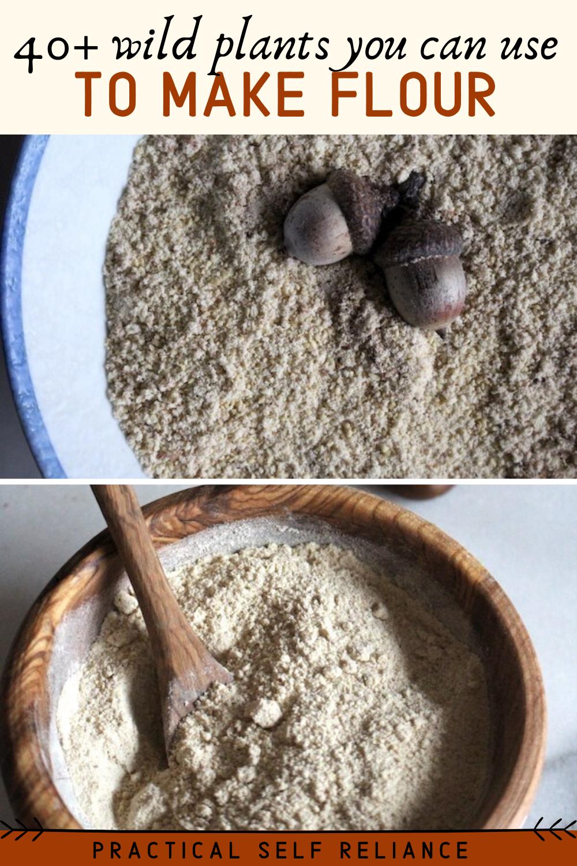 40+ Wild Plants You Can Make into Flour