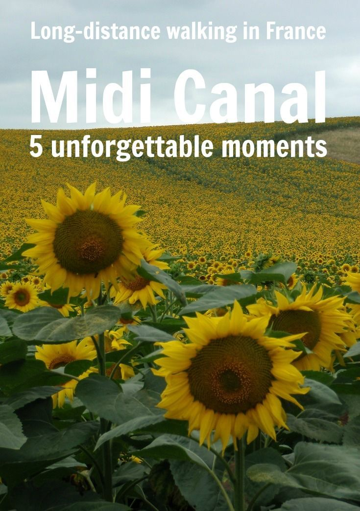 The beauty and tranquillity of the Midi Canal make it one of the most popular holiday destinations in France. Many people journey by boat or bicycle but walking allows you to savour the experience. Sunflowers in the summertime are just one of the highlights. What else will you see?