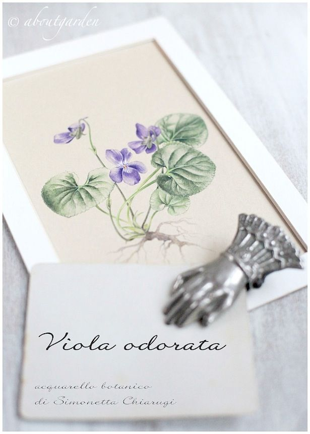 download my violet botanical watercolor