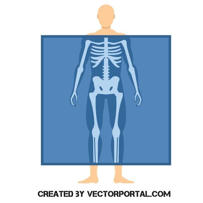 X Ray Body Scan Vector Image Vector Free Vector Images Free Vector Images