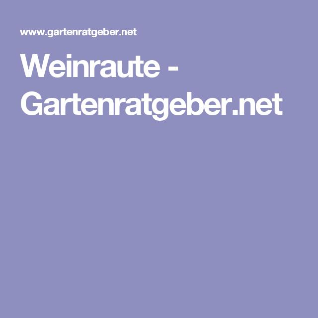 Gartenratgeber  Weinraute | Ruta graveolens and Ruta