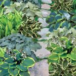 Shady Spaces Hosta Collection
