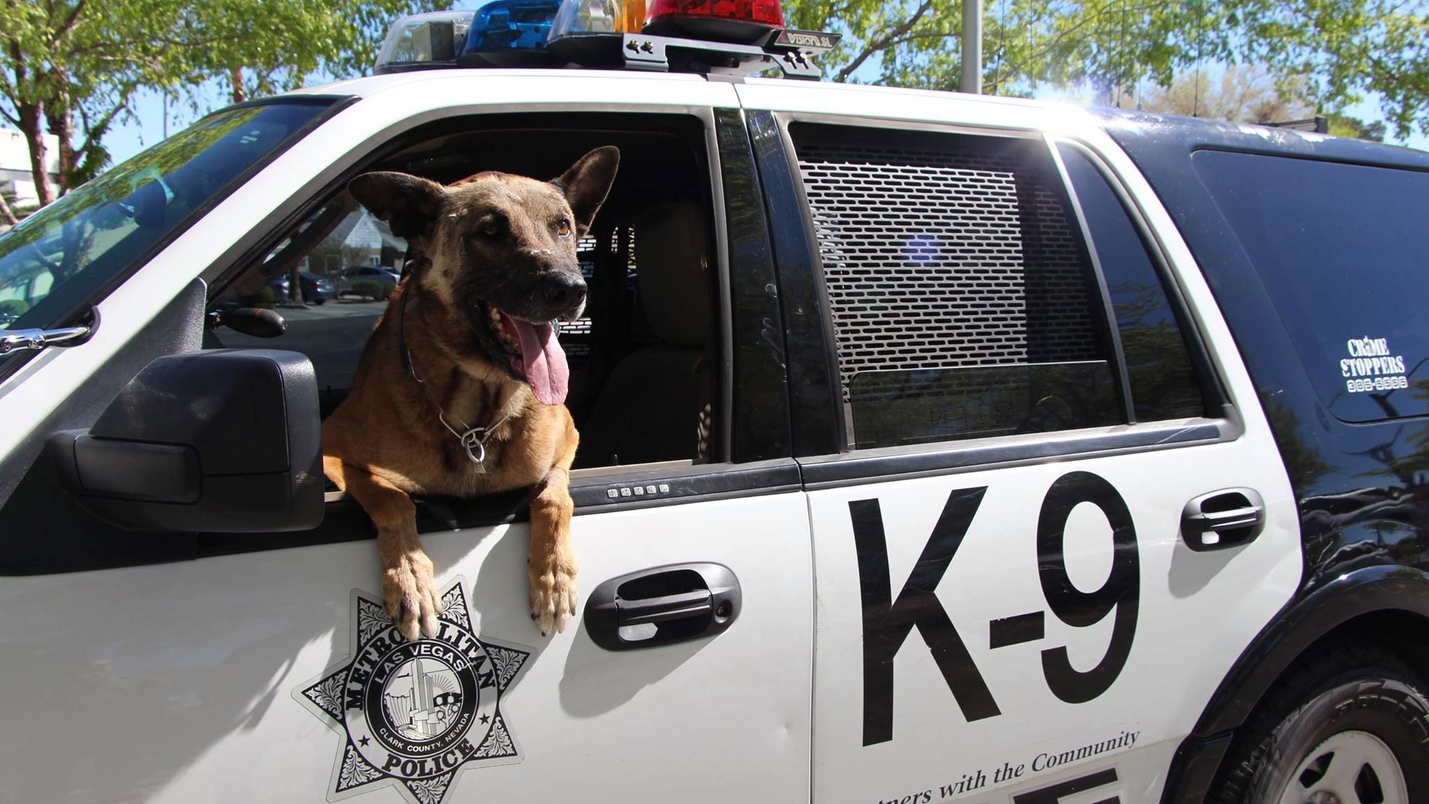 K9 nicky with las vegas metro police department was killed