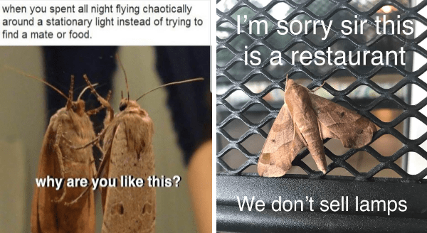It S Moth Week And We Have Memes To Help You See The Light Animal Memes Inspirational Memes Funny Memes