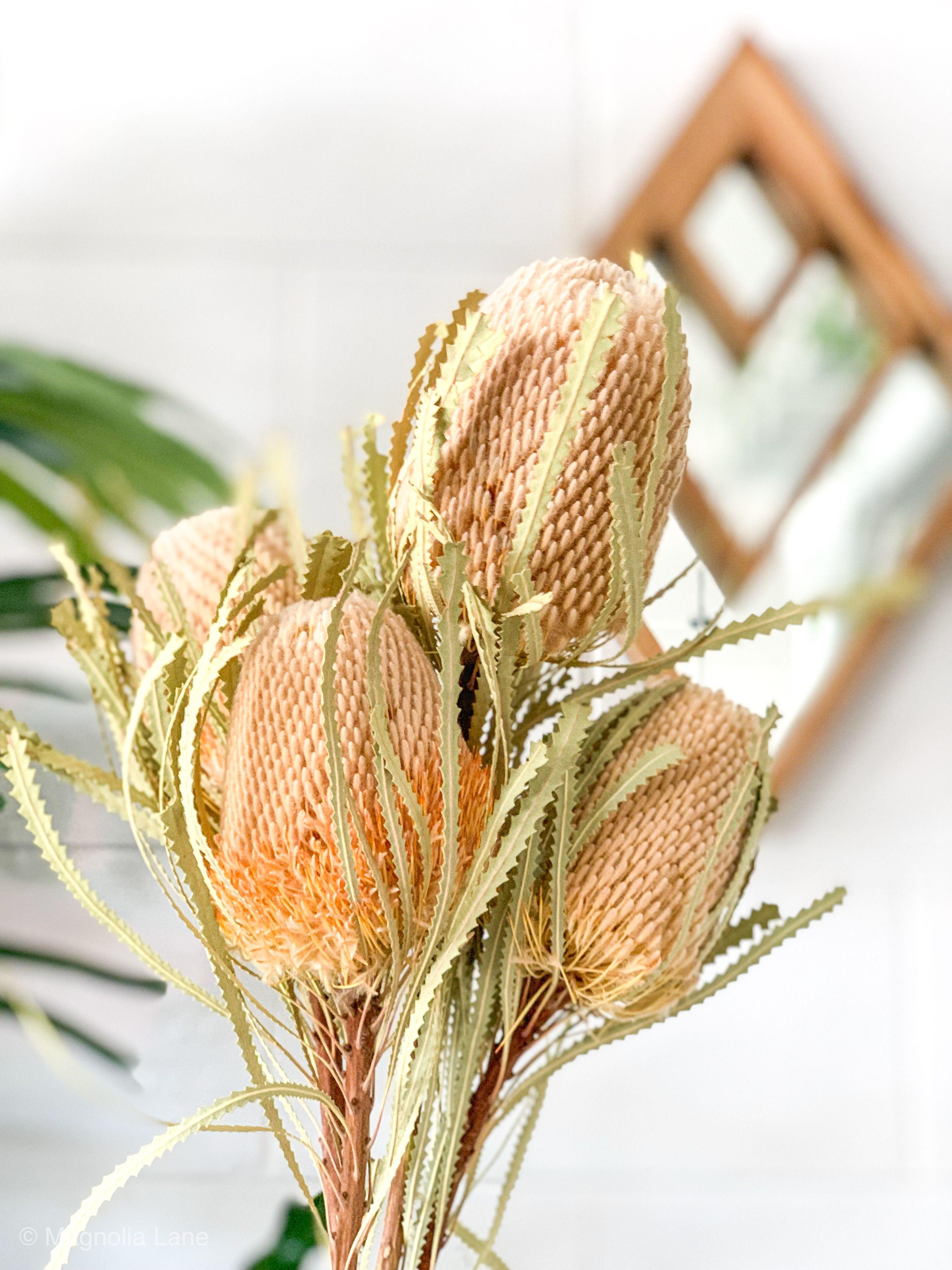 Banksia Hookeriana In 2020 Dried Flowers Australian Flowers Australian Native Flowers