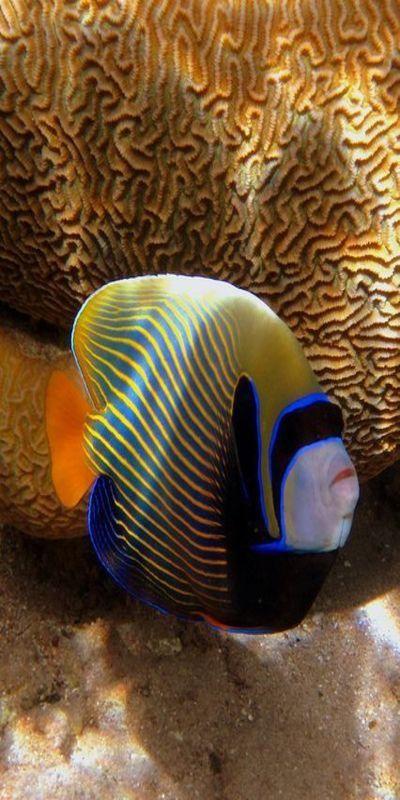 Pin On Underwater Creatures