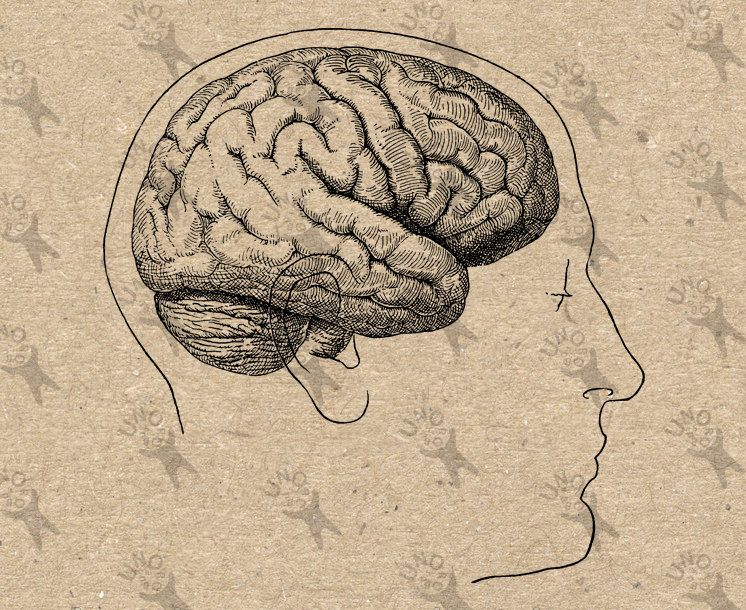 Head Anatomical Brain Vintage Image Retro Drawing Picture Instant