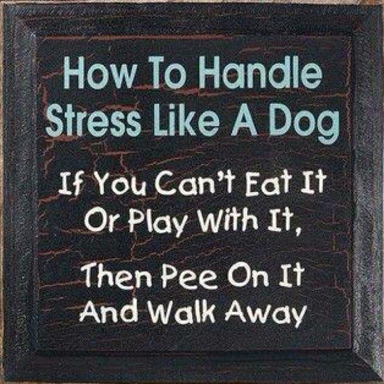 #dogs #dog #dogsrock Filosofía canina ♥